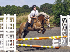 Pony club pony/competitive jumping pony