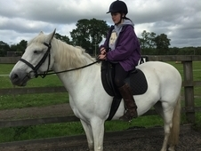 Gorgeous 14. 2 Connemara Mare