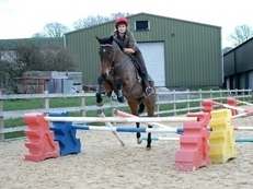 Lovely 15hh Thoroughbred Mare FOR SALE Never raced