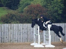 Fun and Talented Show Jumper