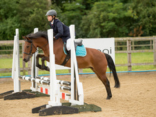 For Share/Loan 13hh 16yo Bay mare