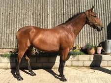 Potential working Hunter 16. 2 CB x WPBR Chepstow