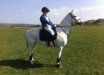 14.1 Lovely Pony Available for Loan