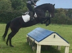 Allrounder/ Event Irish Mare, Dorset