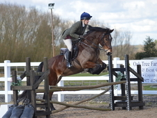 14. 2hh Bay Welsh Section D Mare 9yrs