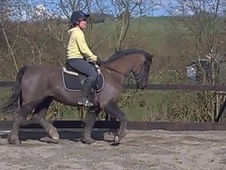 13. 2 Welsh c mare. Tack and rugs