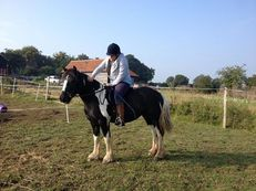 13.1hh Approx traditional mare