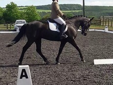 Talented Riding Club/All rounder