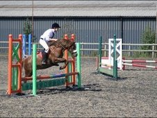 12. 2hh 17yo Companion or pet Loan or Sale