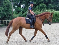 Quality well bred project/Broodmare