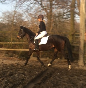 For full loan beautiful 15.2hh TB mare