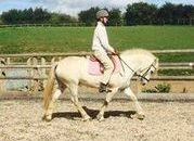 HANDSOME 14.1/2hh 8YR OLD GREY GELDING