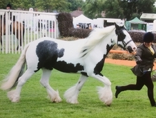Very Pretty Traditional Mare