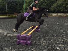 Ebony - 12hh 6 year old black mare