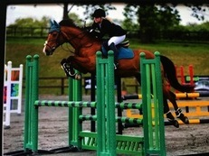 16.1hh Stunning/Classy ISH Eventer FOR SALE