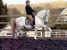 PRE (ANDALUSIAN) DRESSAGE SCHOOL MISTRESS PSG/GP POTENTIAL!!!