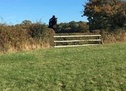 Irish Sport Horse - Experienced Hunter/Perfect Grassroots prospect