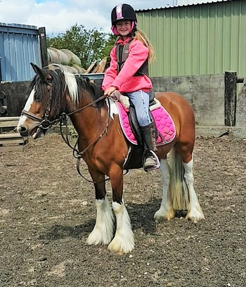 allround family cob pony