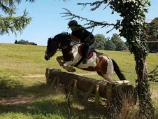 Pretty competition pony 13. 2 by wiscombe oatnell duke