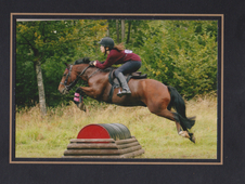 Excellent All-Rounder Pony!