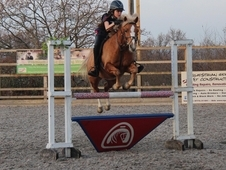 133cm JD Showjumping Pony BS 414964