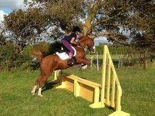13hh Fabulous allrounder 2nd pony