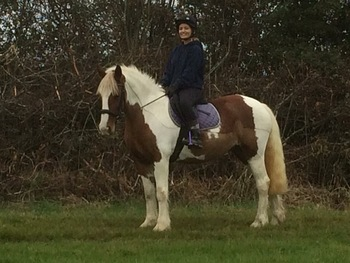 Part Loan/Sharer for. 14.3hh-15hh mare