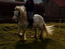 ***14.2HH SAFE SANE AND SENSIBLE MARE***