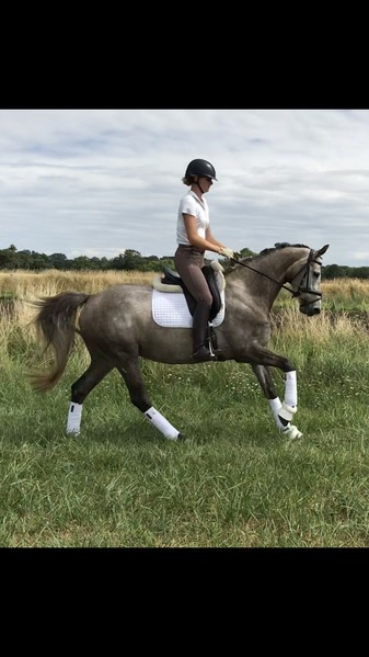 Super Talented 5yr old Mare