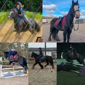 14.1 black all rounder mare