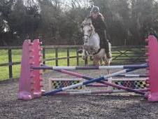 Pennway Gucci- Attractive Reg Section B Gelding