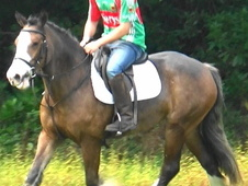 Fun Allrounder/Riding Club, Dorset