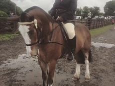 15hh Allrounder For Part Loan