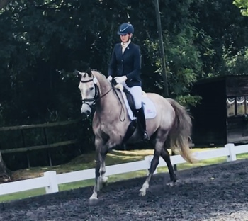 Super Talented and Easy Mare
