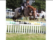 12 yr old superstar schoolmistress XC SJ Dressage Hunting PC 13 h...