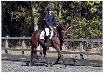 Lovely 15.1hh TB gelding for share, based in Taplow, Buckinghamshire