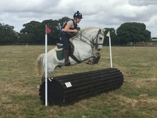 Fantastic natured Connemara gelding