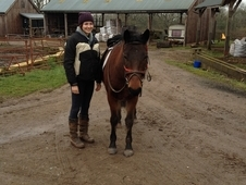 13. 3HH/14HH New Forest Companion/Project Pony for Long Term Loan