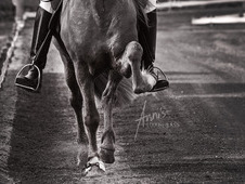 Equine Photography (East Midlands based)