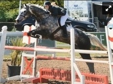 Fantastic 9 year old all rounder gelding for sale !