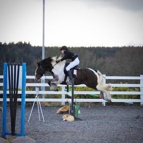 All rounder 14.3hh