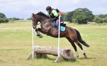 Bred to SJ/event 15.2hh TB x WB