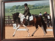 Quality Chaps registered tobiano gelding