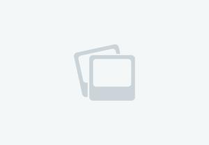 Gabwells Fleur De Lis chestnut PBA filly