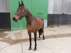 Stunning Broodmare/Companion For Sale