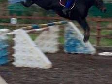 QUIRKY TALENTED JUMPING HORSE
