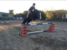 Fun 14. 2 Potential Jumping Pony
