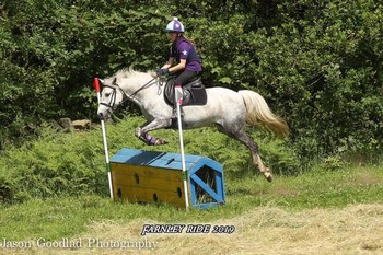 13.2 Pony Club all rounder