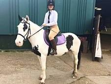 Horse wanted for share/part loan