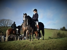 Welsh sec c mare ideal pony club/ hunting pony